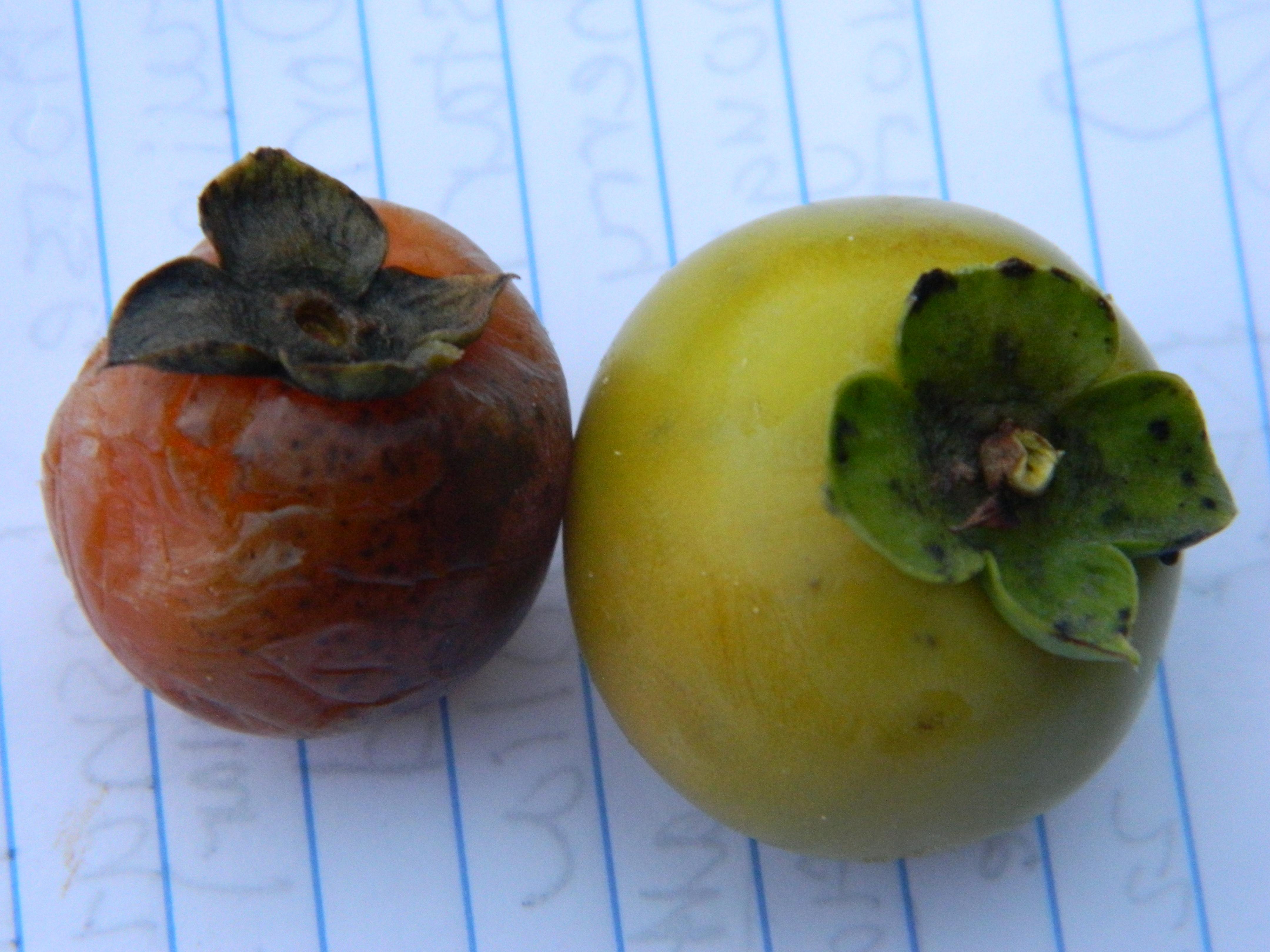 Ripe and Unripe Fruit