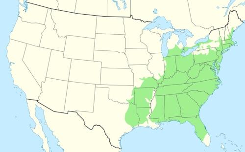 Black Tupelo Distribution
