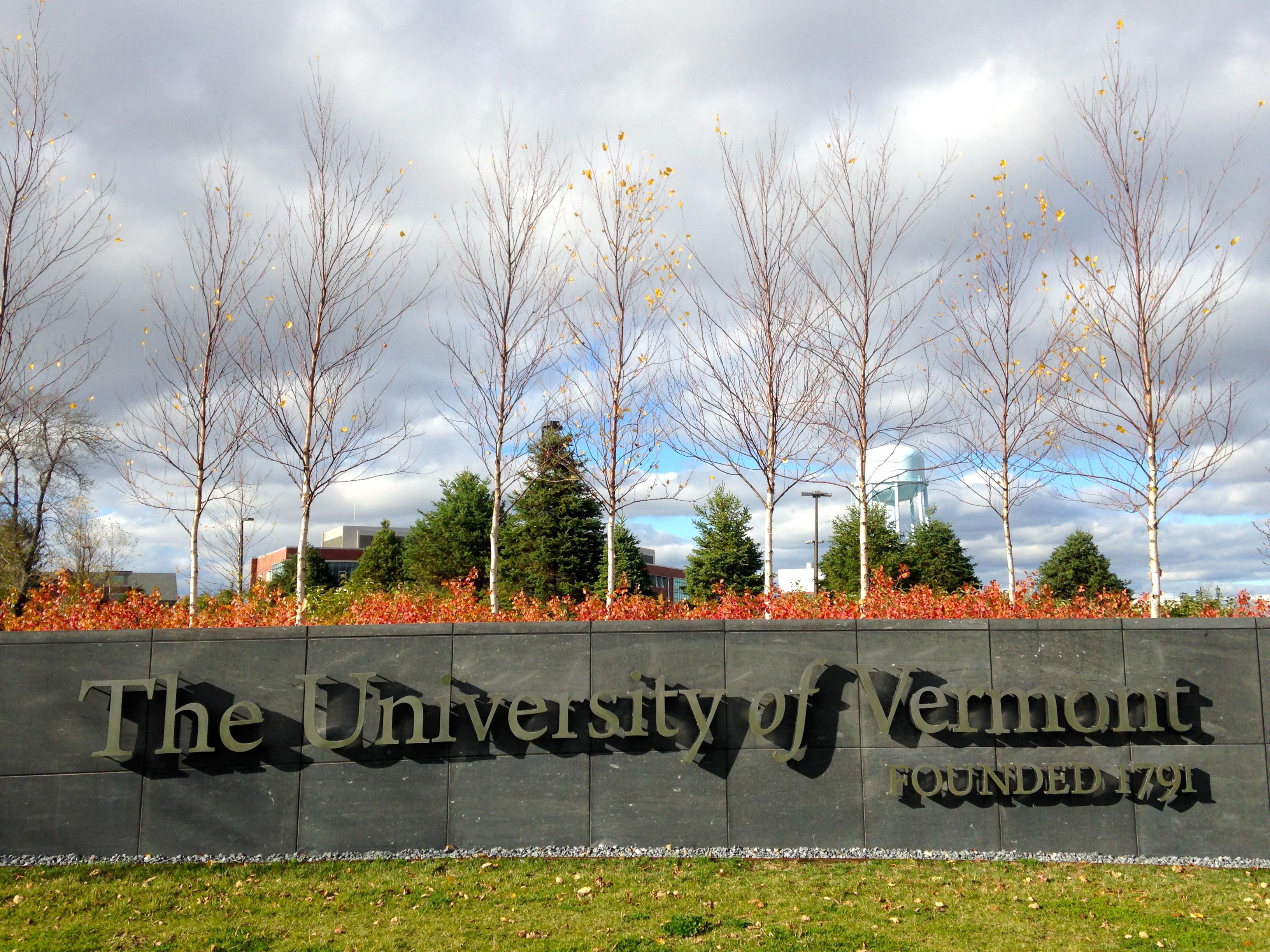 White Spruce behind UVM sign