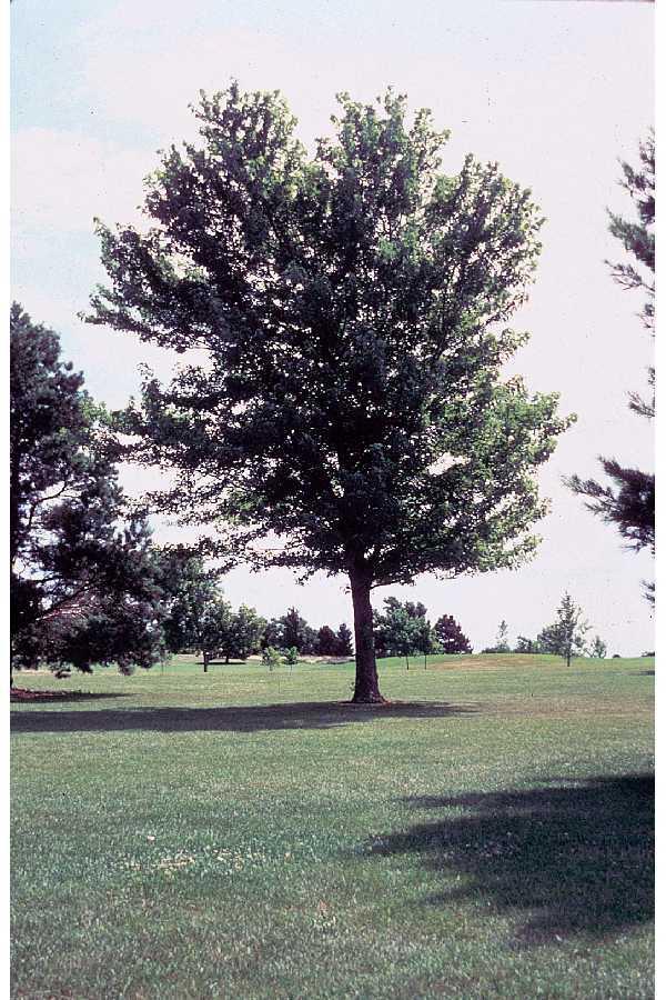 whole tree.jpg