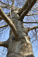 Red Oak 4.jpg