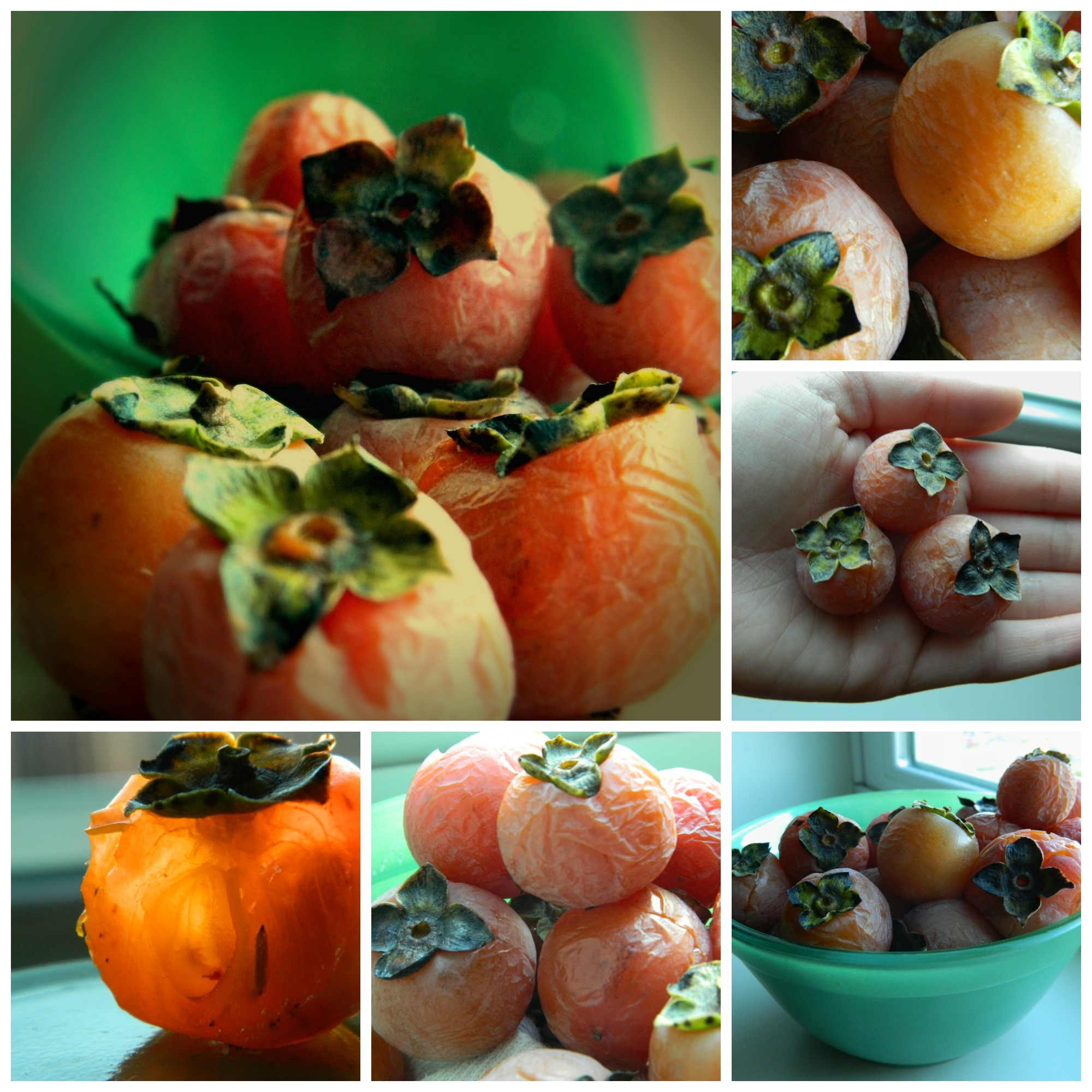 American Persimmon berry 1-5<br />