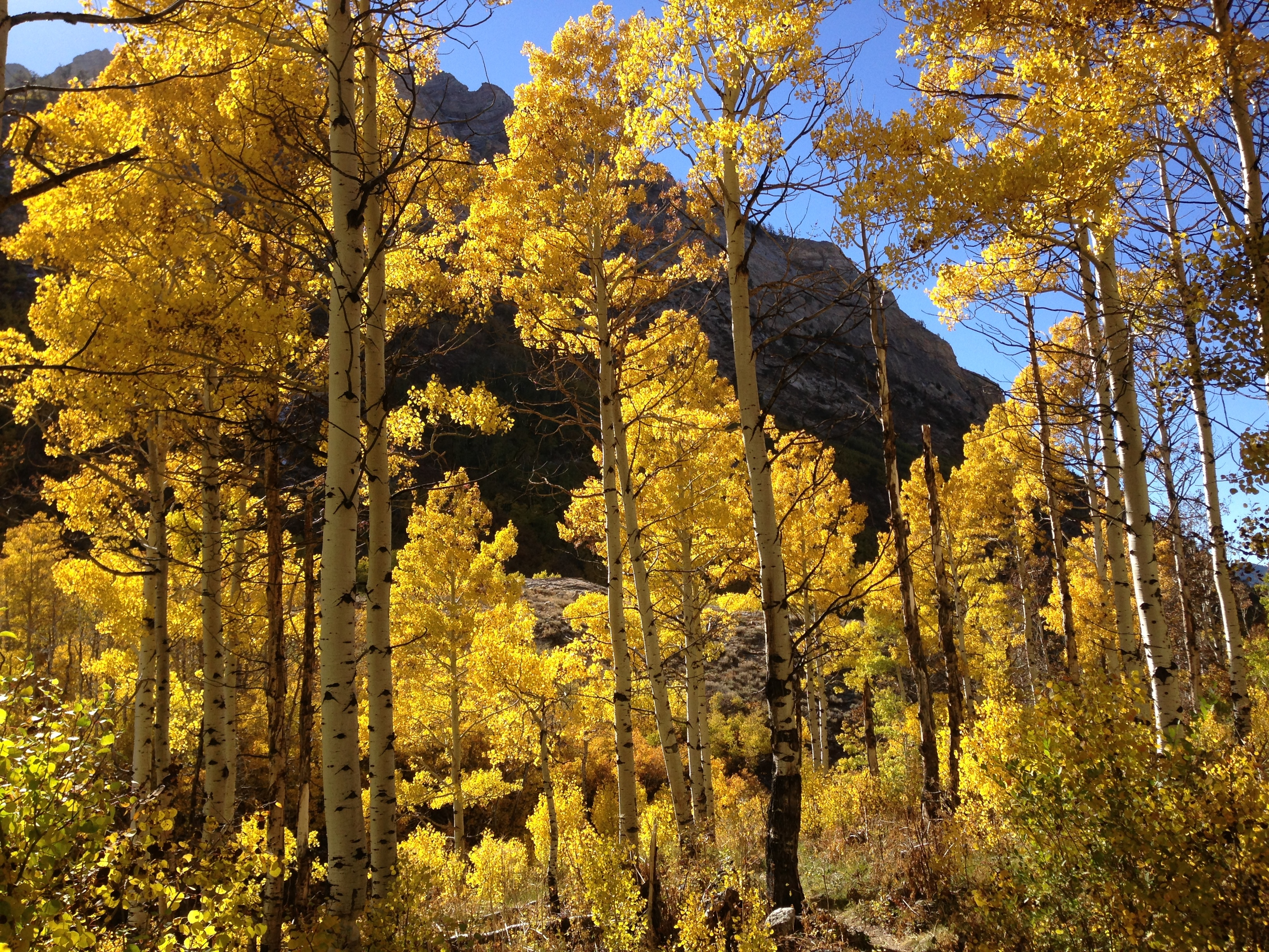 Changing Canyon Nature Trail in Lamoille Canyon