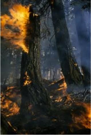 Douglas Fir Fire