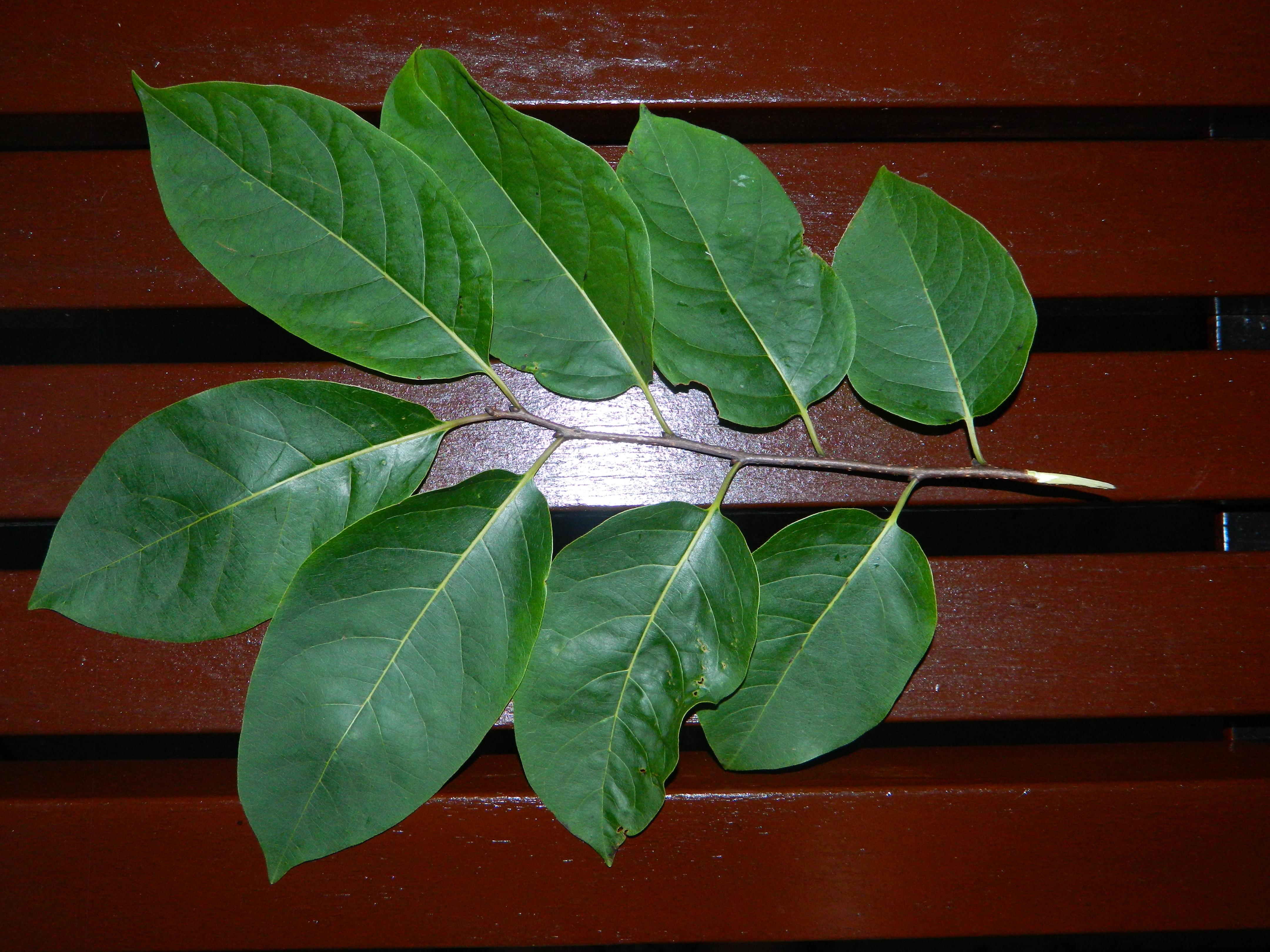 Tree Branching