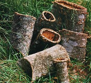 057 tulip tree bark baskets - photo.jpg