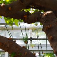 Lipstick Tree Branch